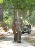 Tuskers passant les routes de la forêt de Jim Corbett Image libre de droits