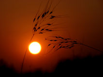 Tusq Sunset. The Indian summer sets behind dried grass Royalty Free Stock Photography