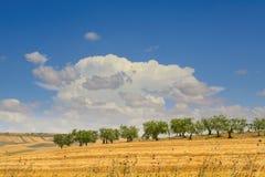 Tussen Apulia en Basilicata: olijfgaard op de geoogste gebieden Heuvelig die platteland door cl wordt overheerst royalty-vrije stock afbeelding