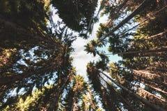Tussen de bomen, de schaduwen en de zon stock fotografie