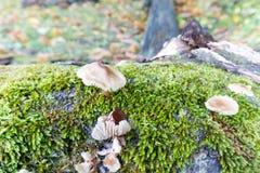 Tussen de herfstvruchten Royalty-vrije Stock Fotografie