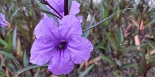 Tussenvoegsel met bloem stock foto