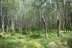 Tussock covered with moss and grass in forest. stock photo