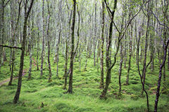 Tussock covered moss and grass in forest. Royalty Free Stock Images