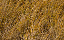 Tussock Grass Stock Photo