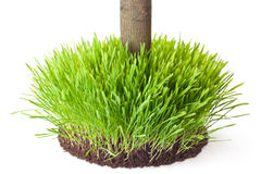Tussock grass with a tree trunk Stock Image