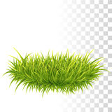 Tussock Of Green Grass Stock Photography