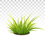 Tussock Of Green Grass. Vector Photo Realistic Tussock Of Green Fresh Grass Royalty Free Stock Photography