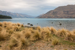 Tussock growing at lake Wakatipu Stock Photo