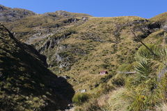 Tussock lands Stock Photos