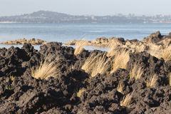 Tussock and Lava Royalty Free Stock Photos
