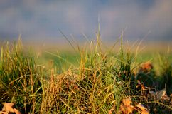 Tussock at sunset Royalty Free Stock Images