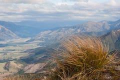 Tussock w wiatrze w Południowych Alps Fotografia Stock