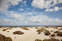 Tussocks of vegetation on a beach in Lanzerote. Tussocks of coastal vegetation on a sandy beach in Lanzerote, Canary Islands with a distant view of the ocean Royalty Free Stock Photos