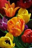 tutaj wiosna Fotografia Royalty Free