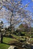 tutaj wiosna Obrazy Stock