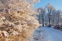 tutaj zima Obrazy Royalty Free