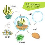Tutorial how to make florarium. Succulents inside glass terrarium, elements for florarium: jar, plant, rocks, moss, soil. Stock Photography