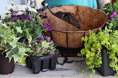 Tutorial of Planting a Hanging Wire Basket of Flowers Royalty Free Stock Photo