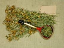 Tutsan Asciughi le erbe Medicina di erbe, erbe medicinali di fitoterapia Fotografia Stock