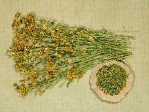 Tutsan Asciughi le erbe Medicina di erbe, erbe medicinali di fitoterapia Immagini Stock