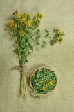 Tutsan.Dried. Herbal medicine, phytotherapy medicinal herbs. Stock Photo