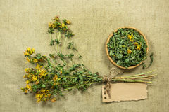 Tutsan. Dried herbs. Herbal medicine, phytotherapy medicinal her Royalty Free Stock Photography