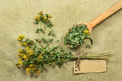 Tutsan. Dried herbs. Herbal medicine, phytotherapy medicinal her Royalty Free Stock Image