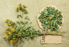 Tutsan. Dried herbs. Herbal medicine, phytotherapy medicinal her Royalty Free Stock Images