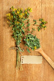 Tutsan. Dried herbs. Herbal medicine, phytotherapy medicinal her Royalty Free Stock Photo