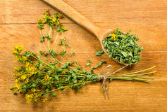 Tutsan. Dried herbs. Herbal medicine, phytotherapy medicinal her Royalty Free Stock Photos