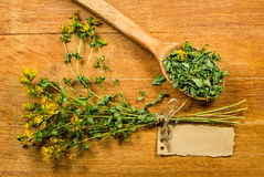 Tutsan. Dried herbs. Herbal medicine, phytotherapy medicinal her Stock Images