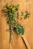 Tutsan Erbe secche Medicina di erbe, fitoterapia medicinale lei Fotografia Stock