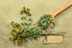 Tutsan Erbe secche Medicina di erbe, fitoterapia medicinale lei Immagine Stock Libera da Diritti