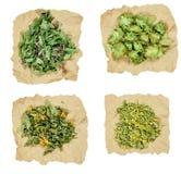 Tutsan, fireweed, melilot, hop. Dried herbs Royalty Free Stock Photo