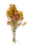 Tutsan flowers dried isolated on a white background Stock Photo