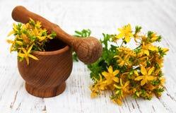 Tutsan flowers  and mortar Stock Image