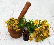 Tutsan flowers  and mortar Stock Photography