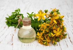 Tutsan flowers  and natural oil Stock Images