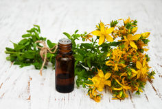 Tutsan flowers and natural oil Stock Image