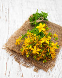 Tutsan flowers Royalty Free Stock Images