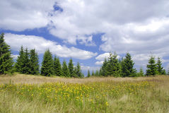 Tutsan meadow Stock Photos