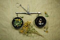 Tutsan secco Medicina di erbe, erbe medicinali di fitoterapia Fotografia Stock Libera da Diritti