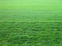 Tutta l'erba verde Fotografia Stock