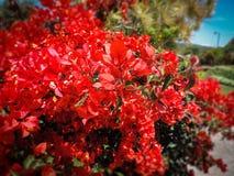 Tutti amano i fiori Immagini Stock