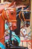 Tutti i cavalli graziosi Fotografie Stock