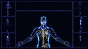 Tutti i sistemi del corpo umano illustrazione vettoriale