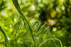 Tutti i tipi di piante nel selvaggio immagine stock