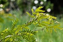 Tutti i tipi di piante nel selvaggio fotografia stock