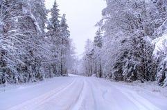 Tutto il bianco sotto neve Foresta della neve in Svezia Fotografie Stock Libere da Diritti